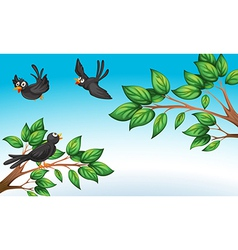 Three birds at the forest vector image