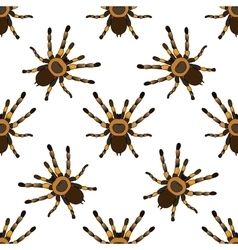 Seamless pattern with tarantula spider vector
