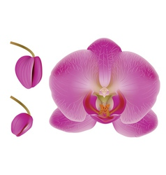 Flower orchid vector