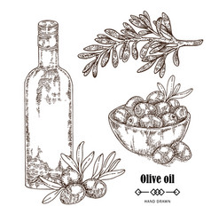hand drawn olive branch in sketch style vector image vector image