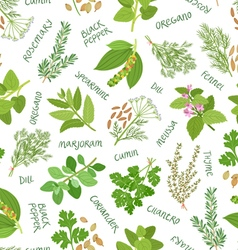 Herbs and spices seamless pattern on white vector image