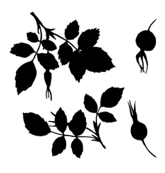 branches silhouettes of briar with leaves vector image vector image
