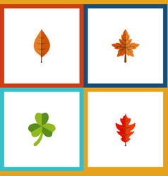 Flat icon maple set of foliage frond leaf and vector