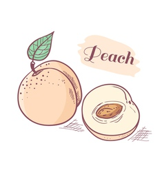Peach with slice vector image vector image
