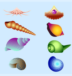 set of sea shells isolated vector image vector image