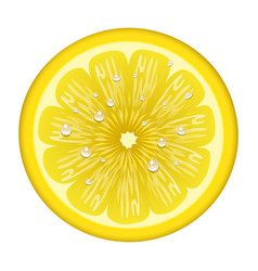 Yellow lemon fruits s vector