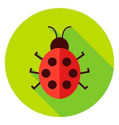 Ladybug insect circle icon vector