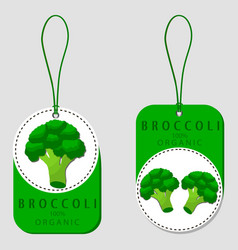 the broccoli vector image