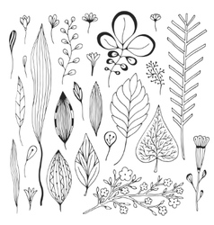 Leaves hand drawn collection cute vector