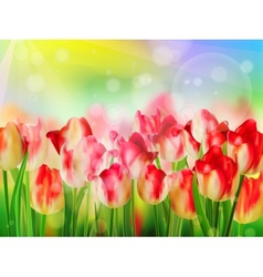 Red tulip bokeh template eps 10 vector