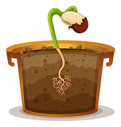 Growing plant in clay pot vector