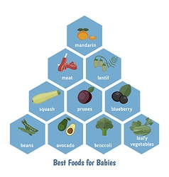 Best foods for babies vector