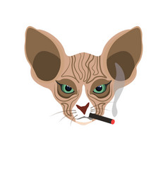 Sphynx hairless cat face with cigarette isolated vector