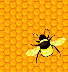 Bumblebee and honeycombs vector