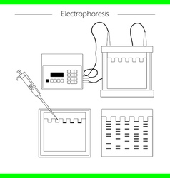 Electrophoresis outline icon vector