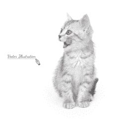 cat in black and white graphic vector image