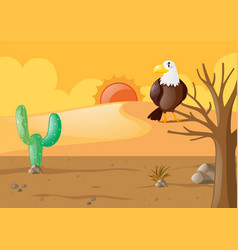 eagle in the dry desert vector image