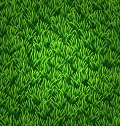 Green grass texture Floral nature spring vector image
