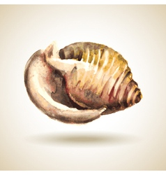 Watercolor shell vector