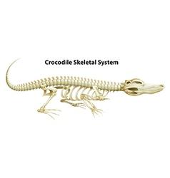A crocodiles skeletal system vector
