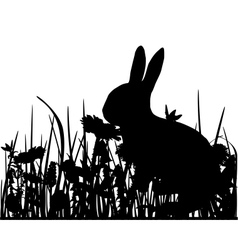Rabbit in the meadow vector image