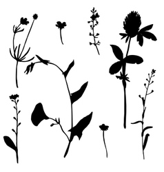 Set of drawing plants silhouettes vector