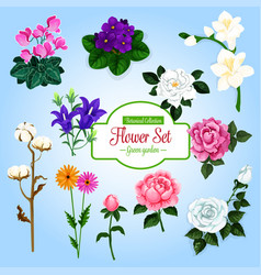 Flower set with garden and house flowering plants vector