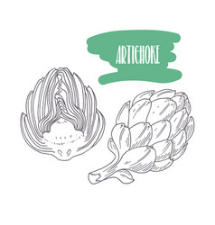 Hand drawn artichoke isolated on white vector