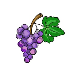 hand drawn doodle grapes vector image vector image