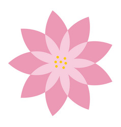 pink flower natural decoration delicate vector image vector image
