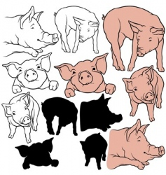 Pigs set vector