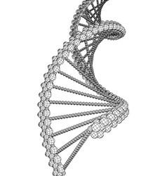 Dna molecule picture vector
