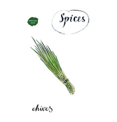 watercolor young green fresh chives bunch vector image vector image