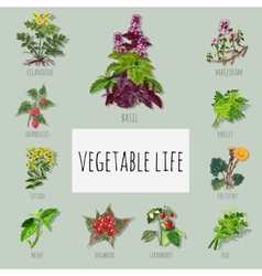 Useful varieties of herbs big set vector