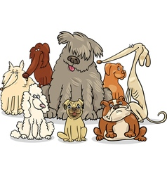 cartoon purebred dogs group vector image
