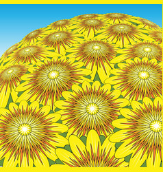 Sunflower bunch vector