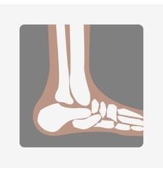 Foot bones joint vector
