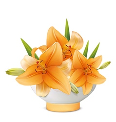 Yellow lily in white vase vector image vector image