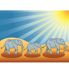 Desert elephants vector