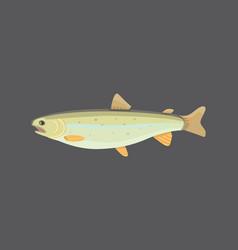 tuna fish in flat style cool vector image