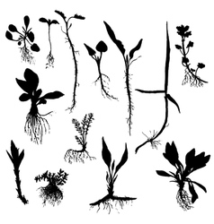 Set of drawing plants silhouettes with vector