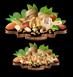mix of different types nuts vector image