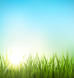 Green grass lawn with sunrise on blue sky floral vector
