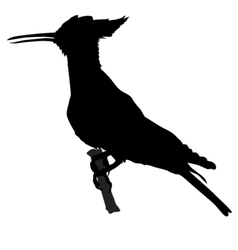 silhouette of hoopoe vector image vector image