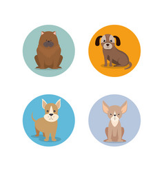 Group of dog breeds vector