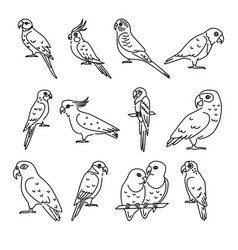 Set of parrot icons in thin line style vector