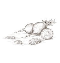 Hand drawn radish vector