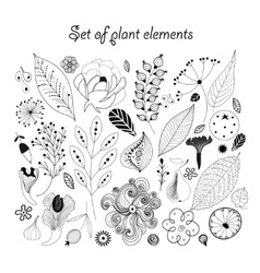 Beautiful graphic set with plants vector