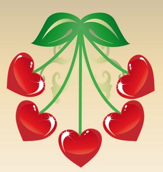 Cherries vector image
