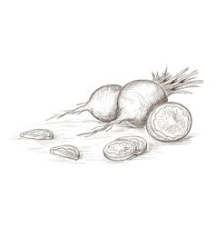 Hand drawn radish vector